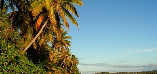 coconut-palms-beach-fiji
